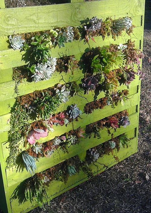 Vertical garden ideas using pallets photograph pallet gard for How to make a vertical garden using pallets