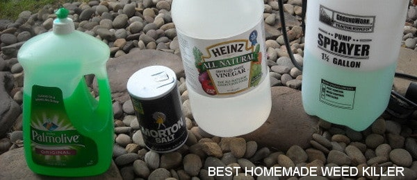 best homemade weed killer for a few dollars