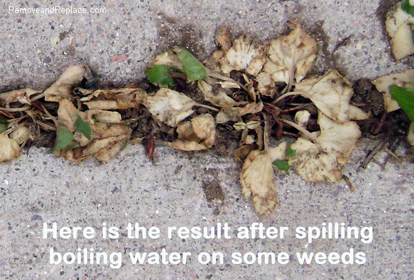 kill weeds with boiling water