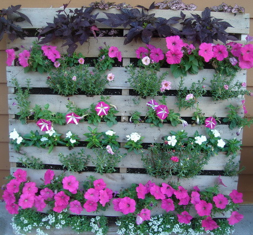 Pallet garden with beautiful purple flowers