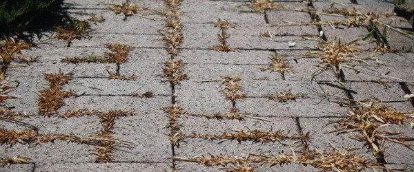 stop weeds growing in your brick pathway