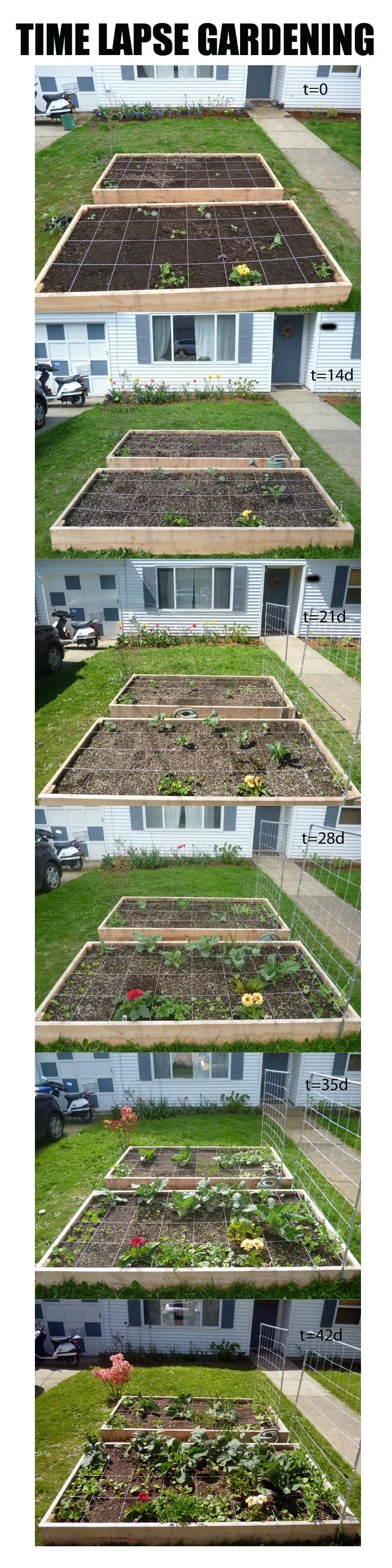 time lapse square foot gardening