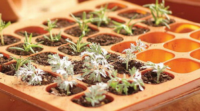 How To Start Seeds Before Planting In Your Garden With A Seed Starter Kit