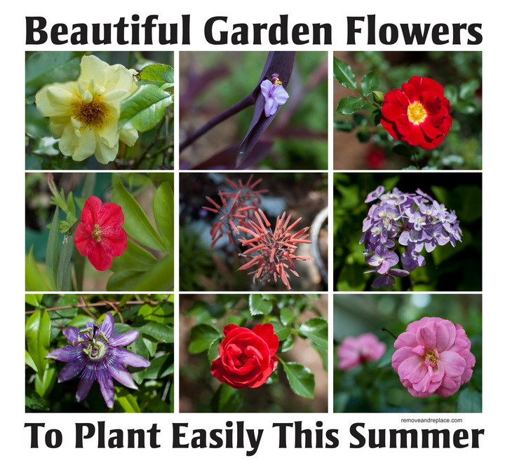 10 Types Of Beautiful Flowers To Plant In Your Garden For