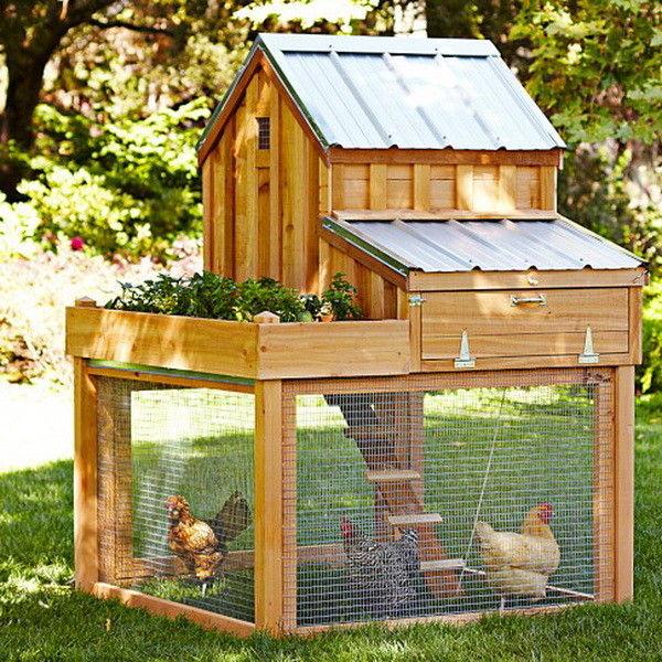 chicken coop house_01