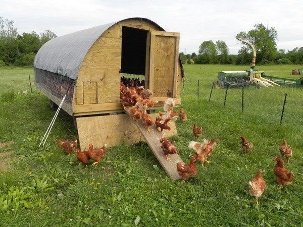 Chicken coop ideas designs and layouts for your backyard for Poultry house plans for 100 chickens