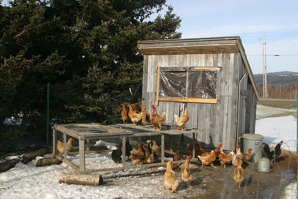chicken coop house_06