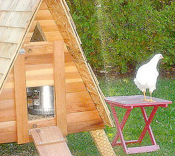chicken coop house_26