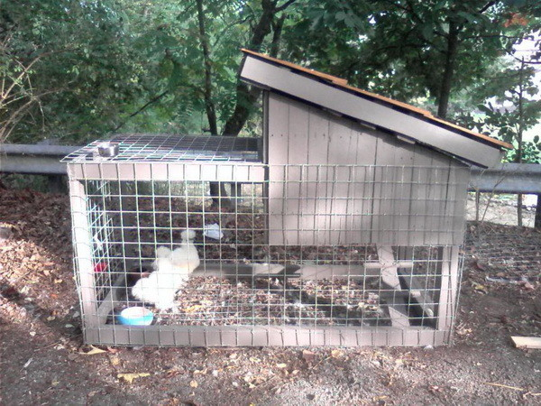 chicken coop house_34