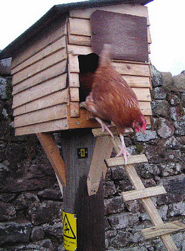 chicken coop house_36