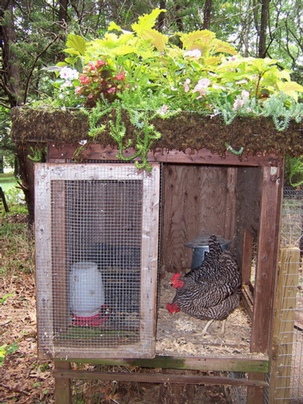 chicken coop house_46