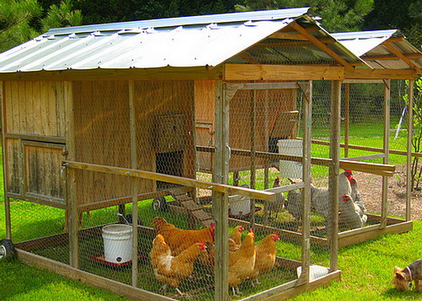 chicken coop ideas designs and layouts for your backyard chickens