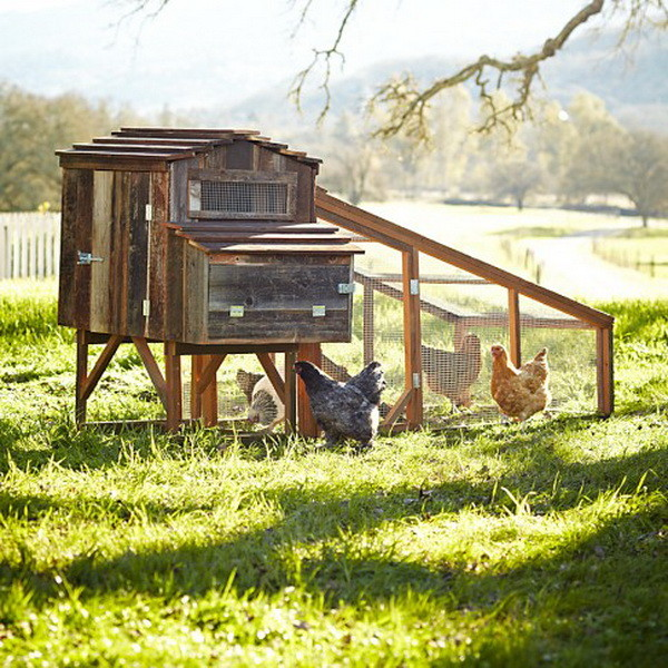 chicken coop house_64