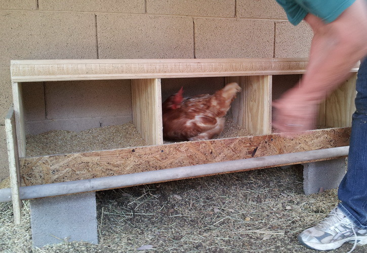 how to build a chicken nesting box. Black Bedroom Furniture Sets. Home Design Ideas