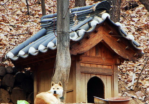 Creative Dog House Design Ideas_03