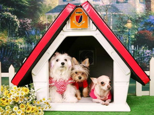 Creative Dog House Design Ideas_10