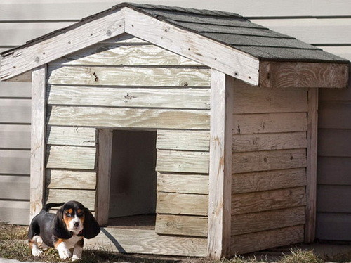 Creative Dog House Design Ideas_12