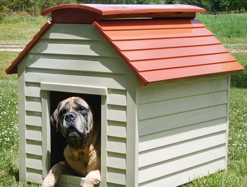 Creative Dog House Design Ideas_15