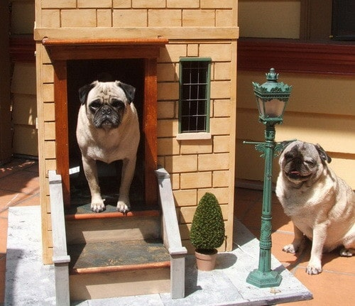 Creative Dog House Design Ideas_21