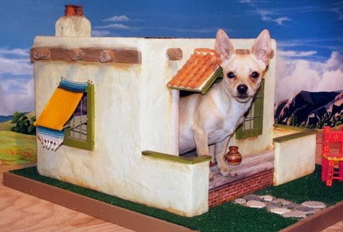 Creative Dog House Design Ideas_23