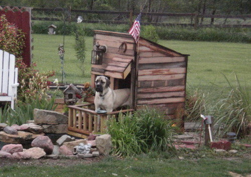 Creative Dog House Design Ideas_24