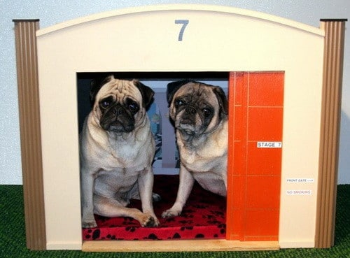 Creative Dog House Design Ideas_25