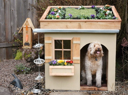 Creative Dog House Design Ideas_26