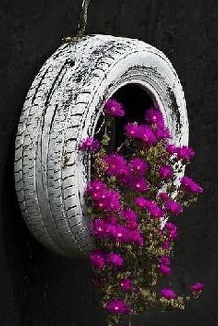 Old tire made into flower pot