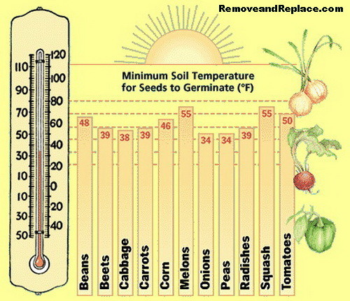 minimum-soil-temp-for-garden-planting