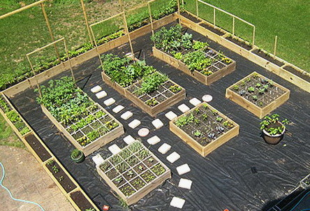 Garden Layout Ideas image of awesome vegetable garden layout Garden Layout Ideas_51