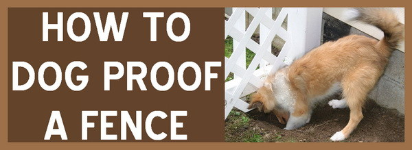 how to dog proof a fence
