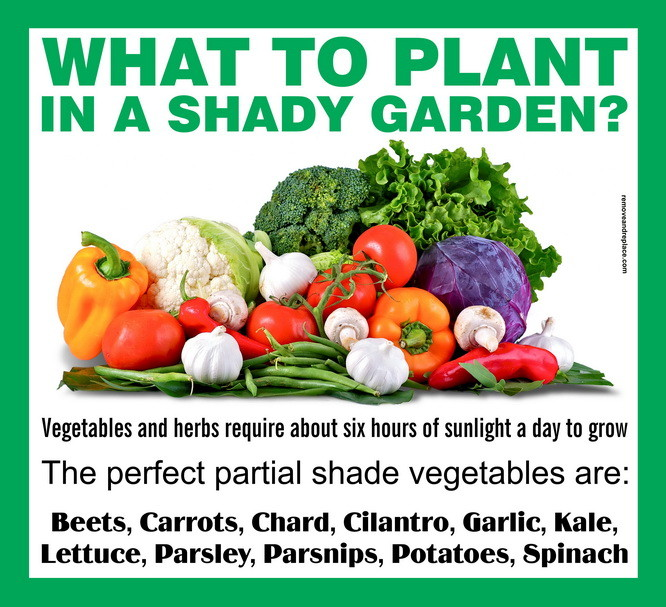 What To Plant In A Partial Shade Garden
