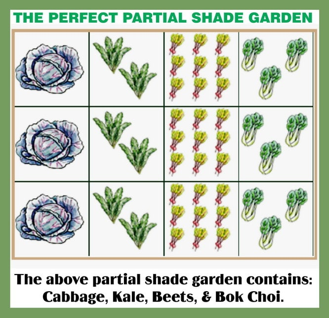 the perfect partial shade garden