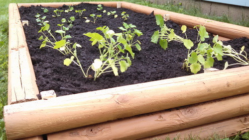 DIY Landscaping Timbers Raised Garden Bed_05