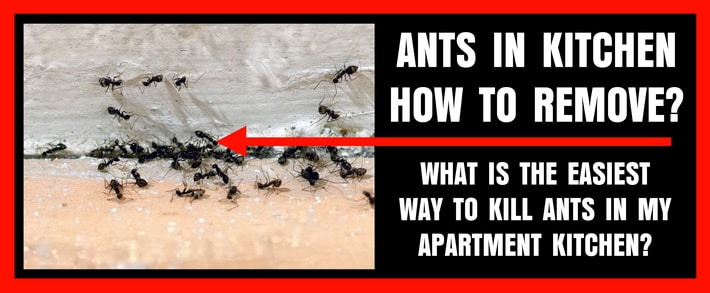 Ants in Kitchen - How To Kill